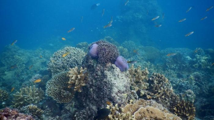 bawah laut